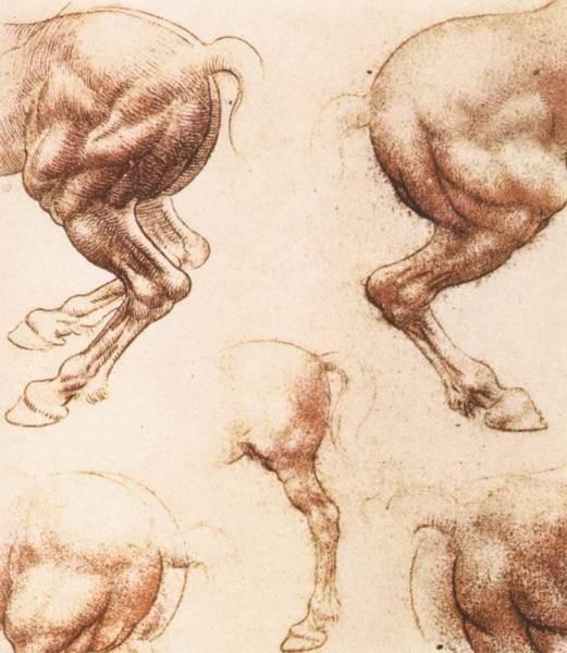 Leonardo da Vinci Study of horses2